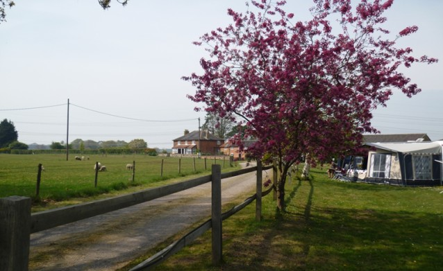 Croft Farm CL overlooking sheep paddock